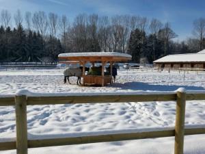 trinkeimer frostsicher pferd